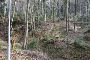 Przedwiosenny las