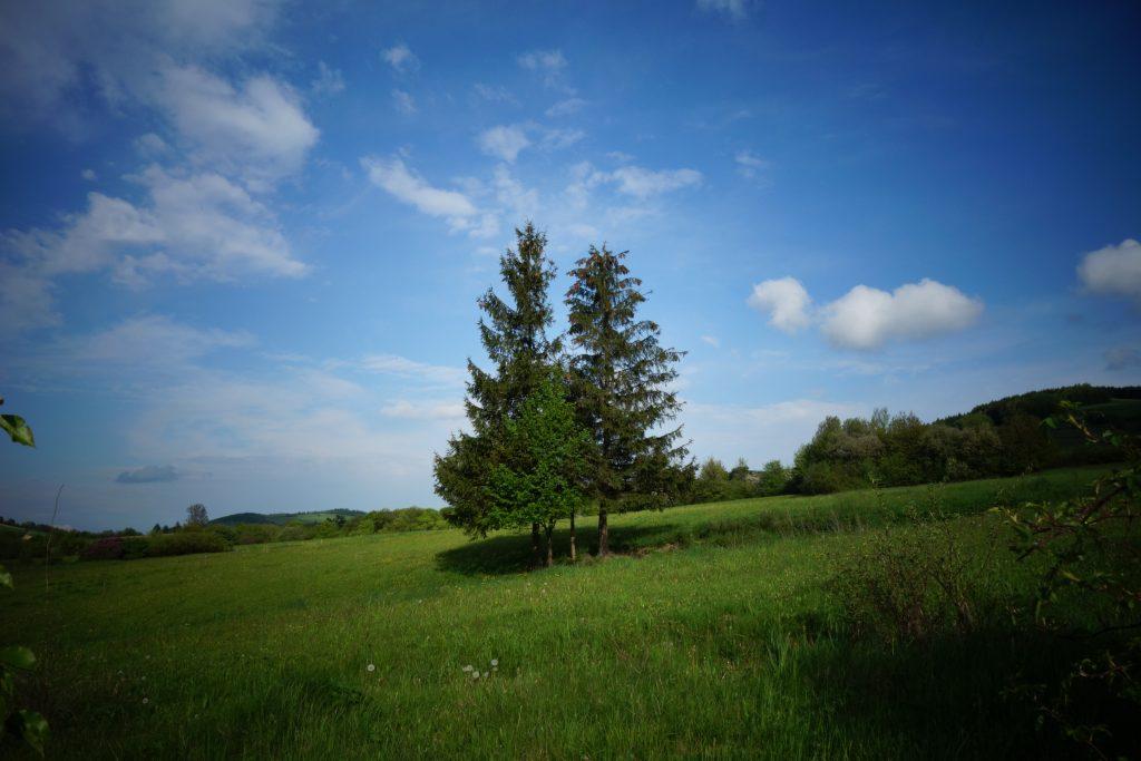 Drzewa dwa