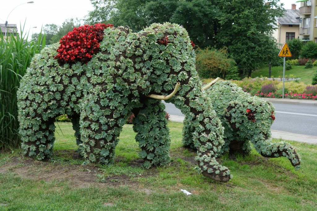 Przeworskie słonie (fot. ja)